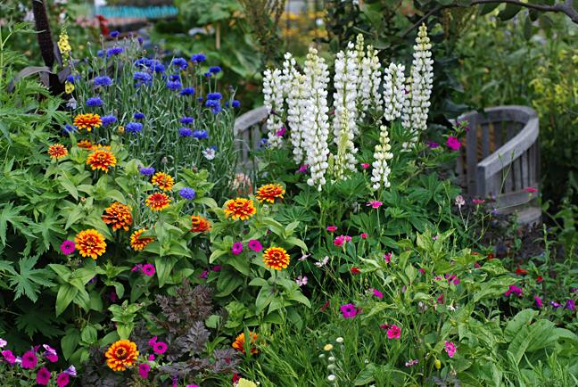 Summer Gardening Guide Annie S Annuals