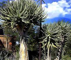 Shade Garden Plants Perennial
