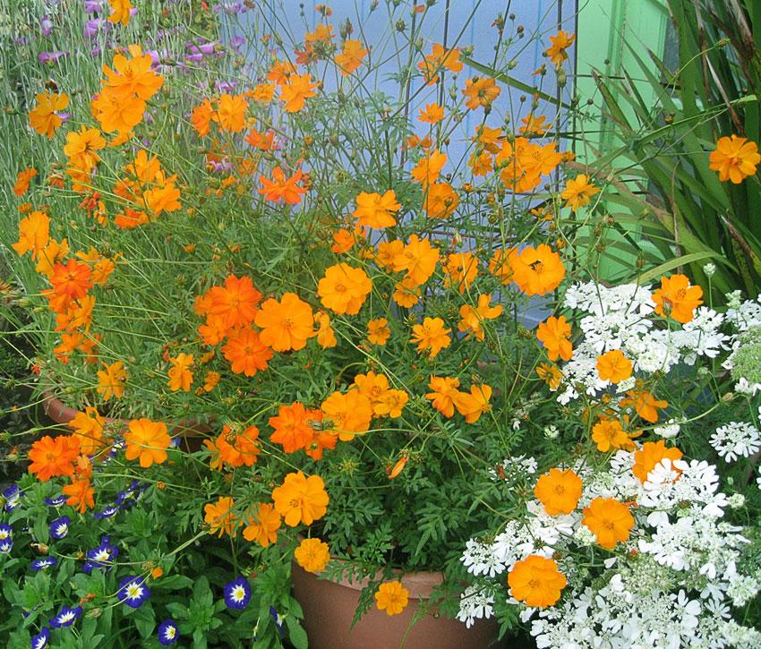 Image Result For Tall Shade Perennials