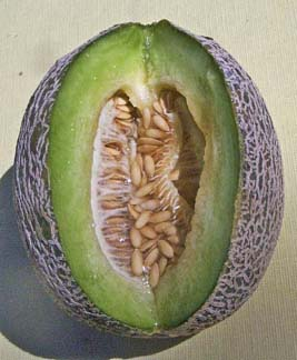 Melon 'Nutmeg Extra Early'