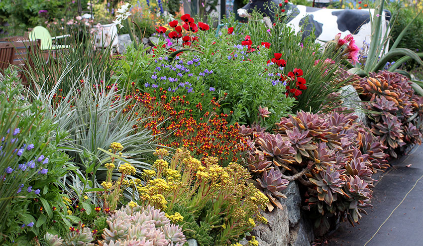 Smashingly Successful Succulents! Learn to mingle succulents with Mediterranean beauties with Ernesto Sandoval, Sat. June 18 at 11 am!