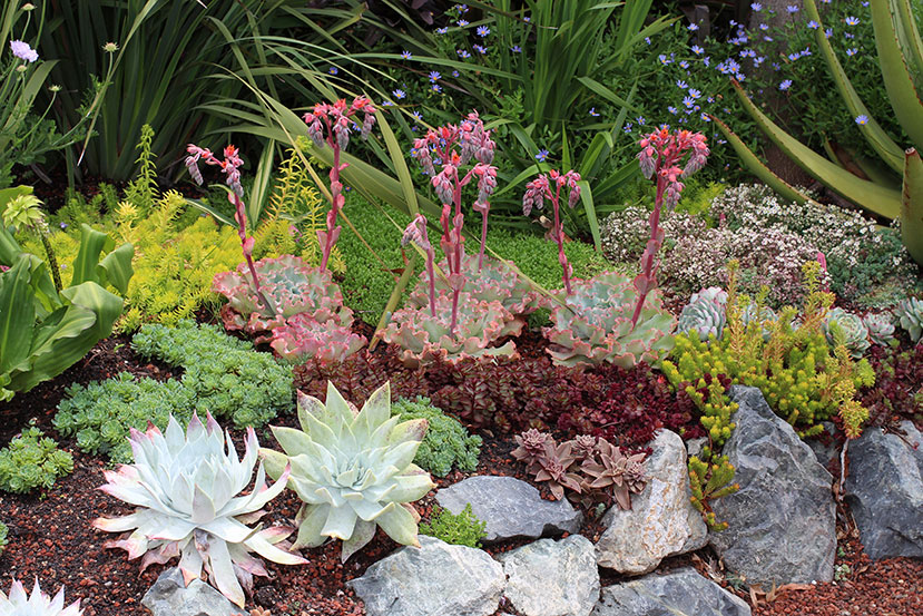 Succulent & Botanical Oddballs! FREE Talk with Brian Kemble, Curator of Ruth Bancroft Garden Saturday, July 23 at 11 am!