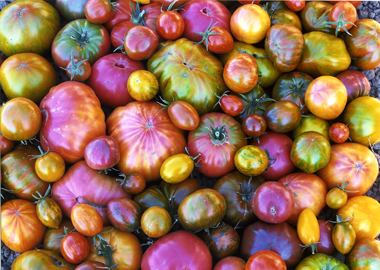 Lessons from a Tomato Whisperer!